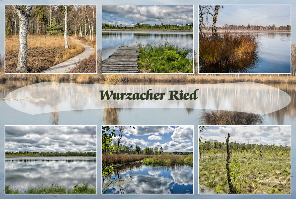 Collage Wurzacher Ried