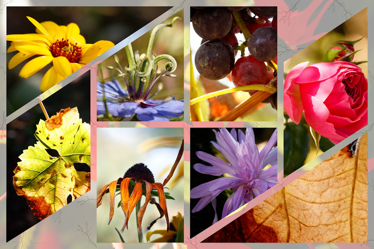 Collage Blumen