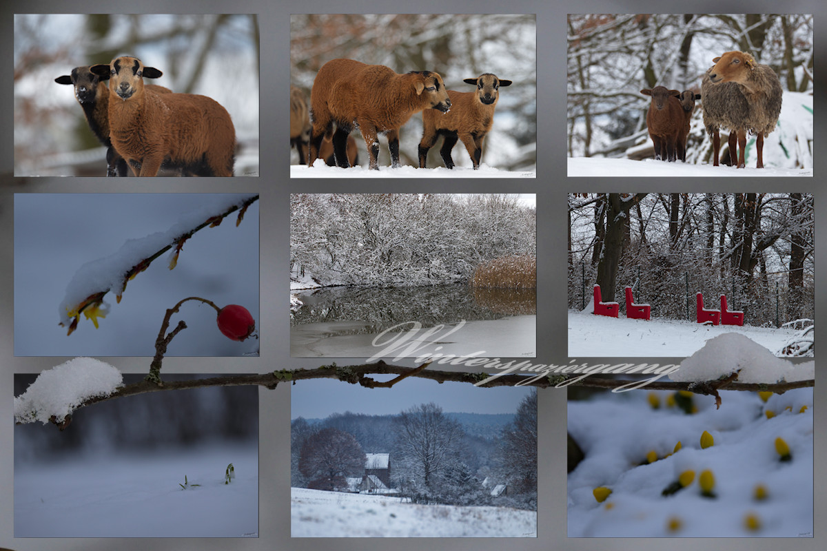 Collage Winterspaziergang