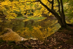 Indian summer mirror